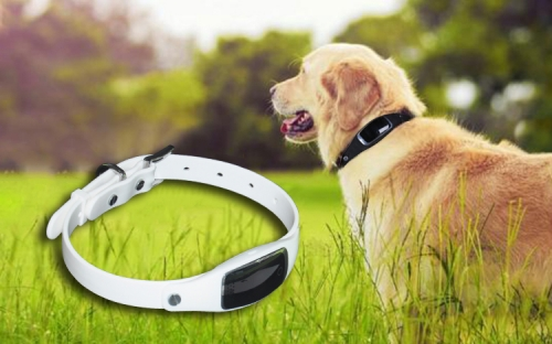 S1 Fashion GPS Pet Collar